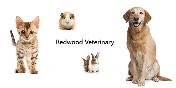 Dogs, Cats, Rabbits, Guinea Pigs at Redwood Veterinary Hospital in Salt Lake City