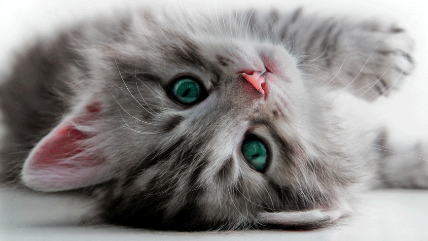Beautiful green eyed kitten