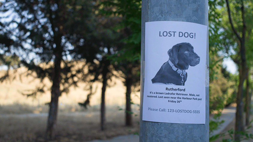 Poster for a lost dog.