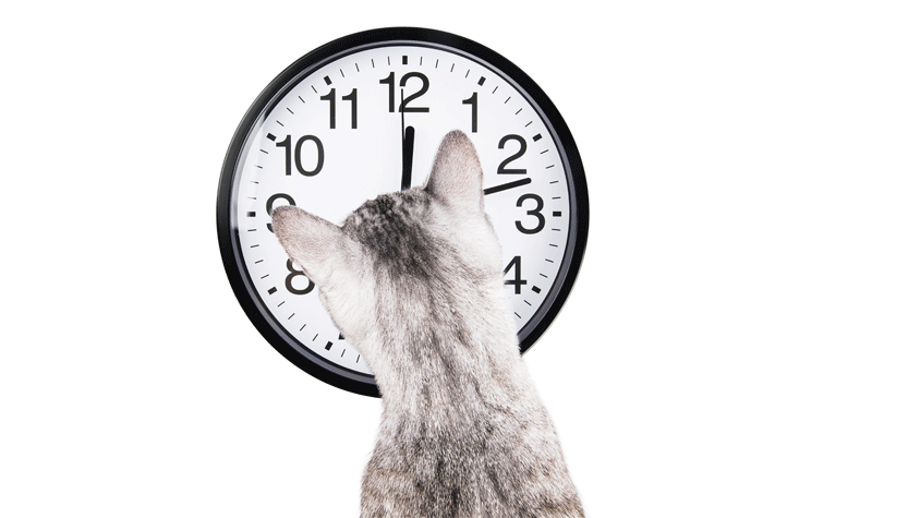 Cat watching clock