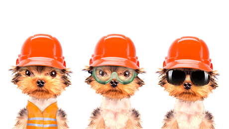 Three dogs in construction gear