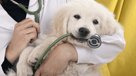 Dog and Stethoscope at Veterinarian