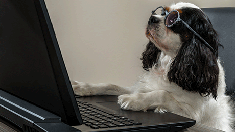 Dog Blogging at a Computer