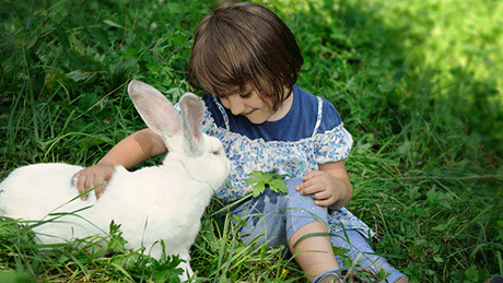 Rabbit with little girl in a grass patch