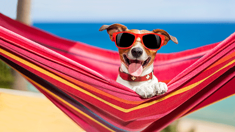 Dog relaxing in hammock with sun glasses